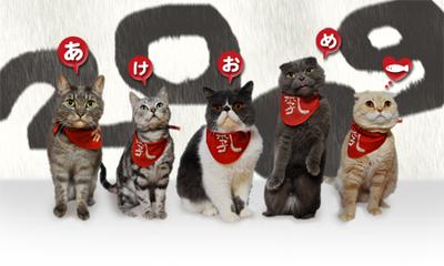Cat2008