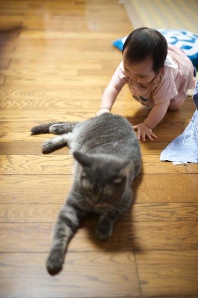 Cat6_2