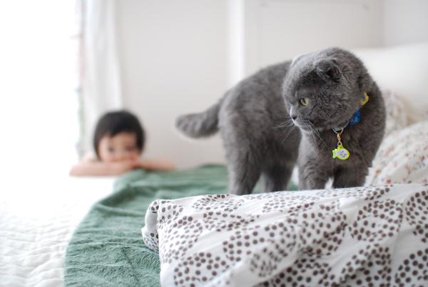 Cat47