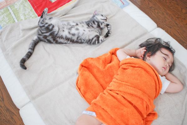 Anzu_cat