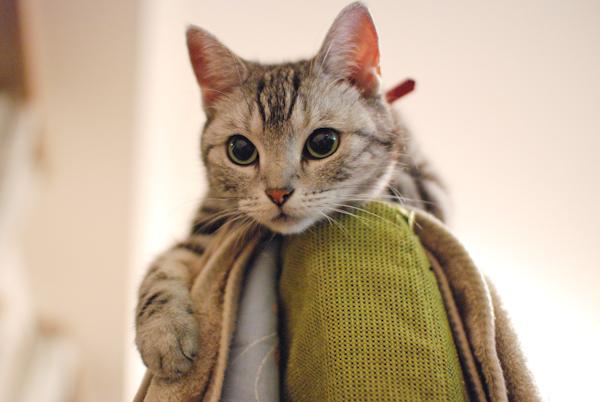 Anzu_cat7
