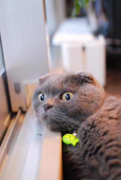 Miu_cat2