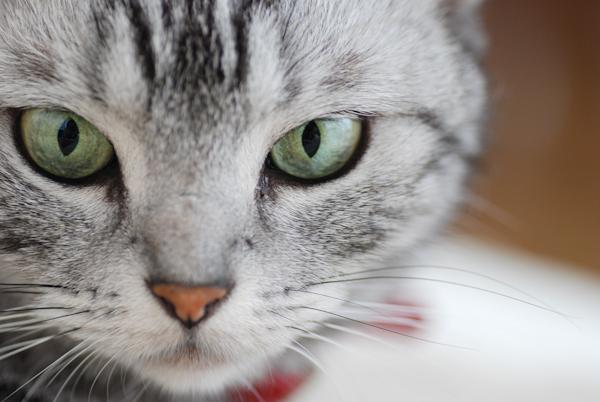 Anzu_cat8