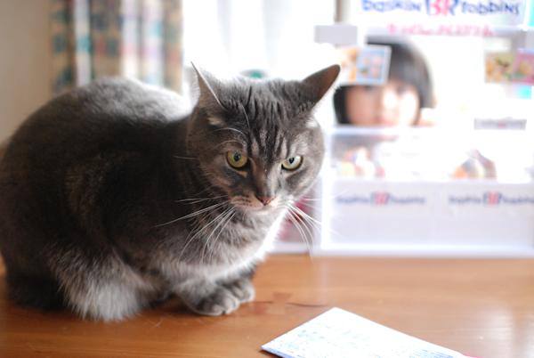 Cat0166