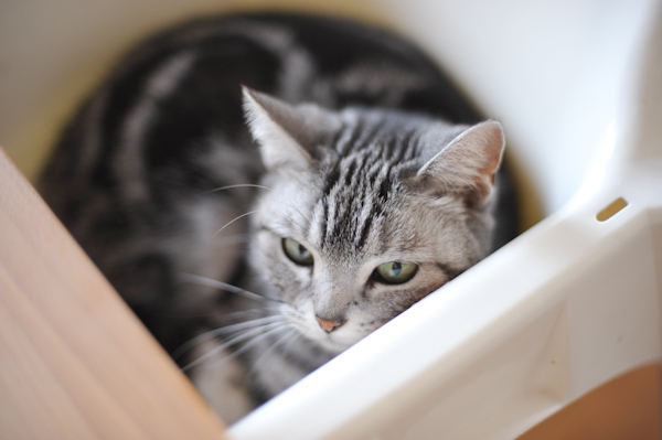 Cat2801