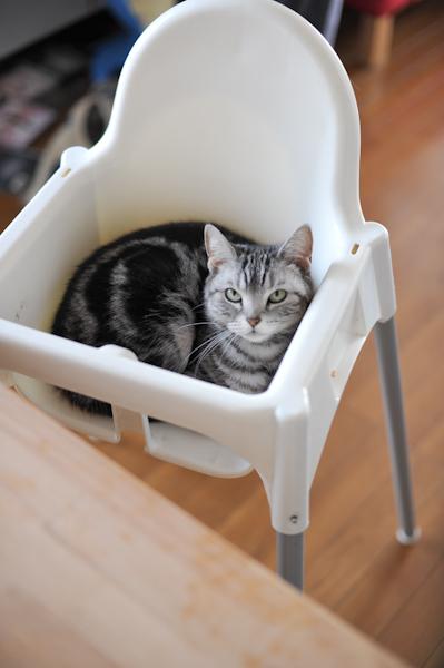 Cat2803