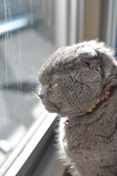 Cat2846